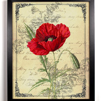 Image of Red California Poppy Ephemera Antique Illustration 8 x 10