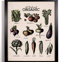 Image of Organic Vegetables Antique Illustration 8 x 10 Giclee