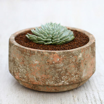 Distressed Terracotta Succulent Pot