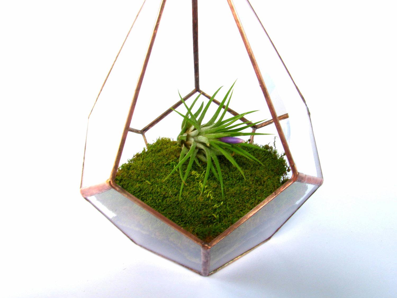 ... Hanging Terrarium / Copper Teardrop Terrarium / Glass Hanging Planter -  Thumbnail 3 ...