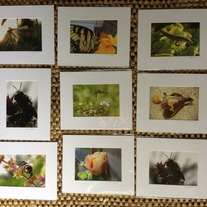 SALE 5x7 Nature Photographs Matted to 8x10