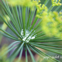 Spring Nature Prints 8x10 Photograph Dill, Rue and Dew