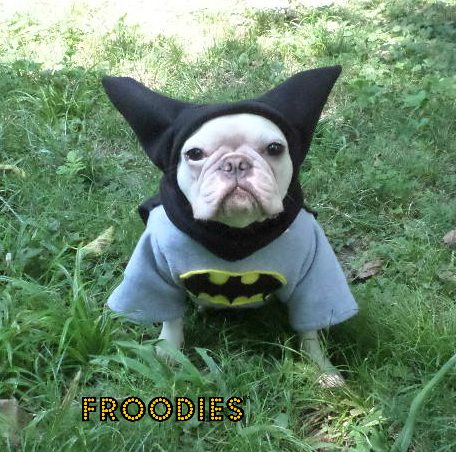 French Bulldog Boston Terrier Pug Dog Froodies Hoodies Halloween ...