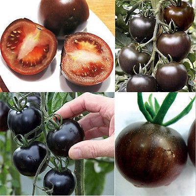 Garden 20PCS Rare Seeds Tomato Black Cherry Russian Heirloom Vegetable Seed New