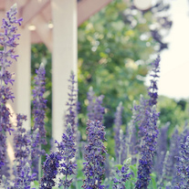 Purple_20flowers_202_20small_medium