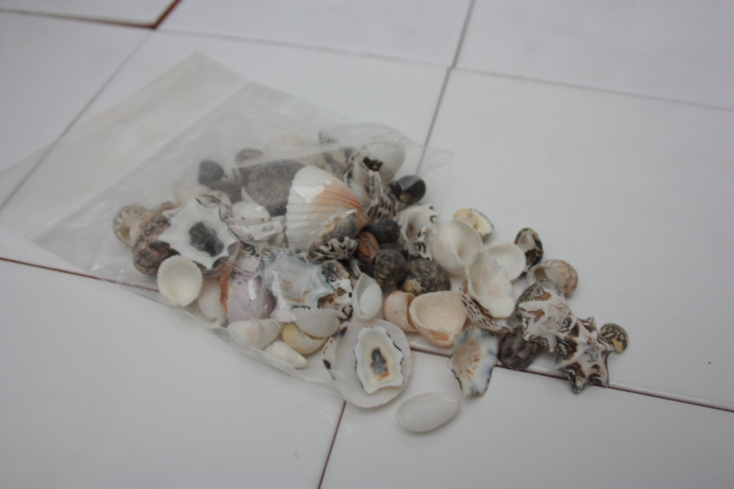 bag of 100 assorted small sea shells natural decor and