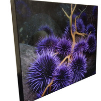 Sea_20urchin_20canvas_medium