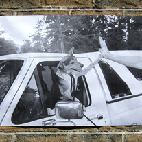 Doggy High 5 poster by Andrea Sonnenberg