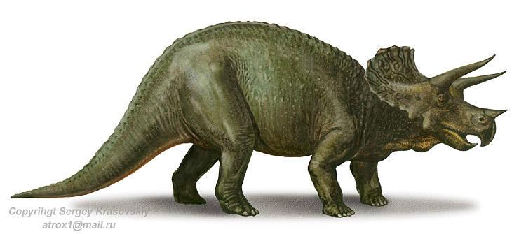 Triceratops Skull 3x3 Sticker On Storenvy