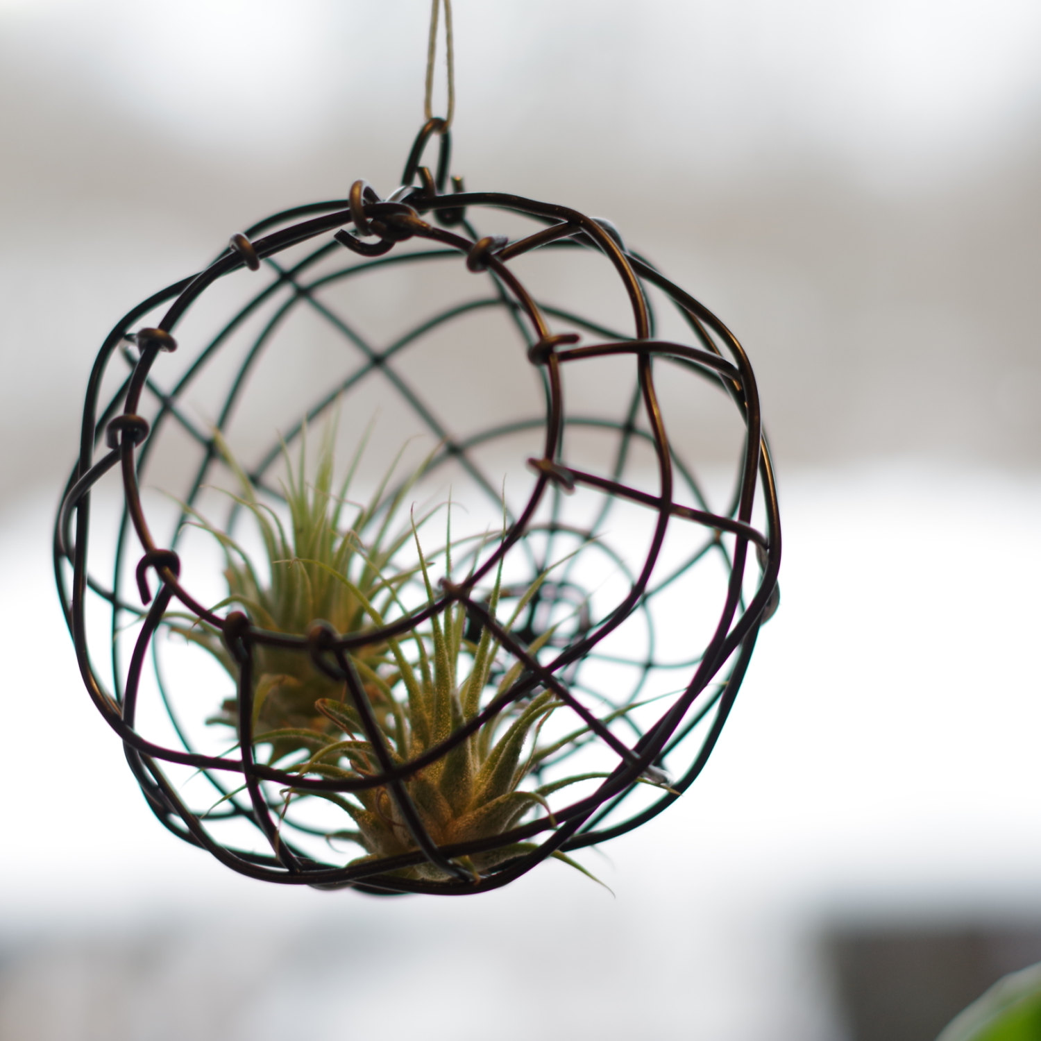 Air Plant Holder Decorative Basket Small Wire