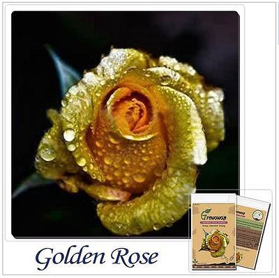 50 Pcs Bonsai Flower Rose Seeds Really Rare Golden Rose Natural Growth Sold By Flower Seed Store On Storenvy